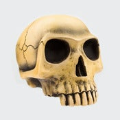Image of Richard Cranium - Bone