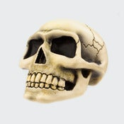 Image of Small Skull - Bone