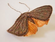 Image of Moth Butterfly Brooch / Ornament Brown Vintage Wool and Satin