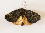 Image of Moth Butterfly Brooch Ornament Dark Brown Vintage Wool with Yellow