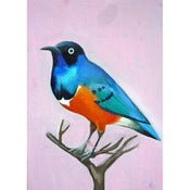 Image of Daisy Clarke: Great Tailed Grackle