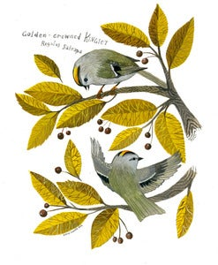 Image of Golden-crowned Kinglets Original Gouache Painting