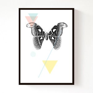 Image of Moth Geo (A4)