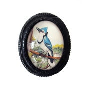 Image of Blue Jay Carved Resin Brooch by Hotcakes Design