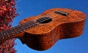 Image of Loprinzi Model ACK-C Curly Koa Concert