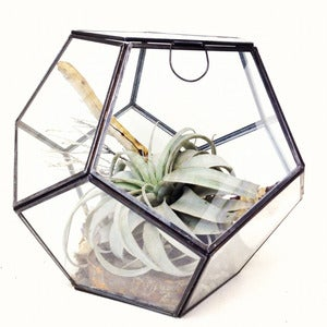Image of faceted terrarium
