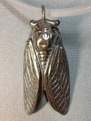 Image of Winged Cicada