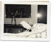 Image of BIRD ON A COUCH VINTAGE POLAROID PHOTO
