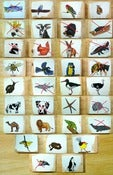 Image of ANIMAL BLOCKS