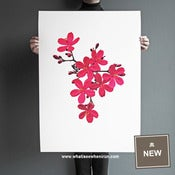 Image of Chinoiserie - Jatropha Integerrima - A1