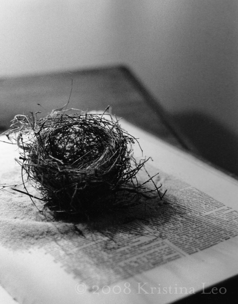 paintings of birds nests. (Kristina Leo — Bird Nest)