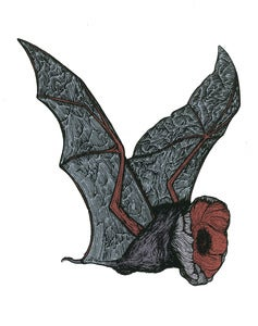 Image of POPPY BAT