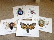 Image of Entomology Original Paintings