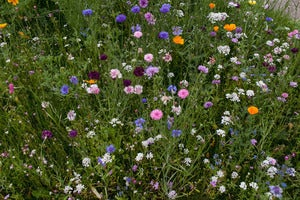 Image of Tirolian Wildflowers (Summer)