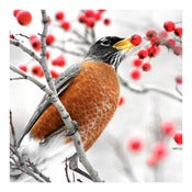 Image of ROBIN - Archival Print