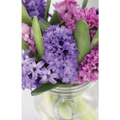 Image of Hyacinth Vase *NEW*